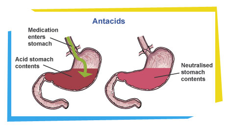 biology and chemistry of stomach acid: how antacid works, what, Skeleton